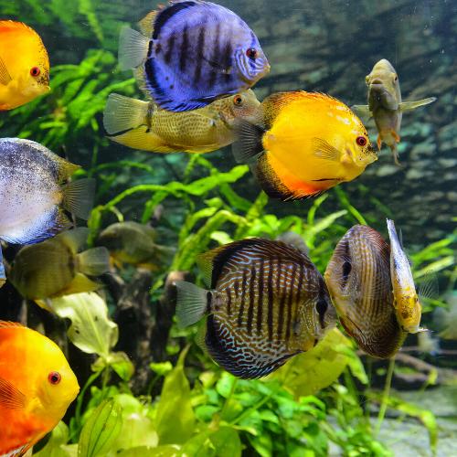 attractions near heathrow airport - London Sealife Aquarium